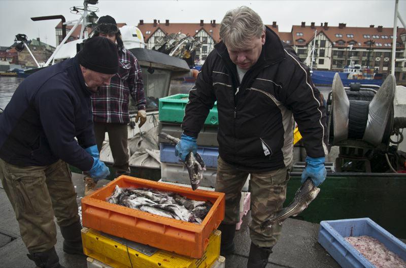 Zakaz połowu dorsza w większej części Morza Bałtyckiego - ustka24.info