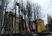 Silny wiatr łamie drzewa w centrum Ustki. Ostrzeżenie przed sztormem - ustka24.info